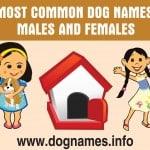 Most popular dog names 2017