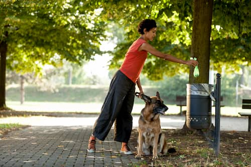 german shepder with woman