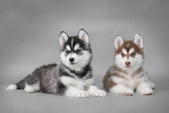 Husky pretty dog names