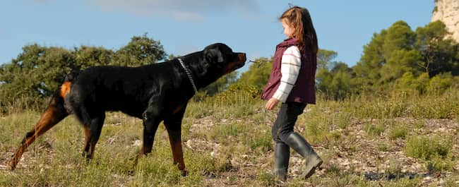 rottweiler dog with a girl