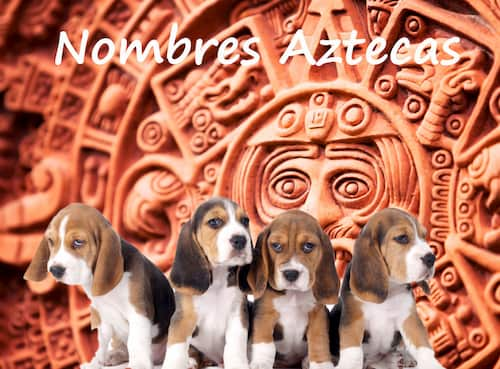 aztec dog names