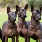 Aztec dog names