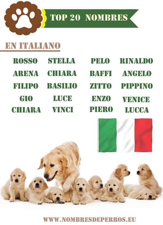 better italian dog names