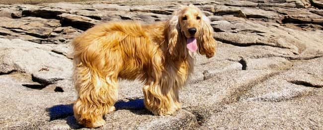 dog greek islands