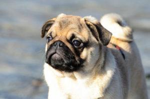 Dog names- 1000 names to call your dog