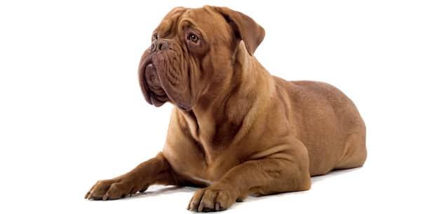 strong dog names