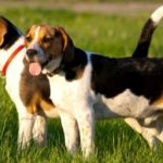 Best names for Hunting dogs