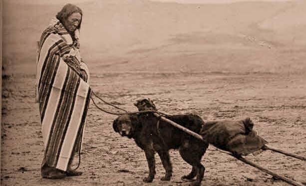 dog maori