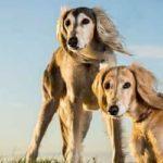 Egyptian dog names