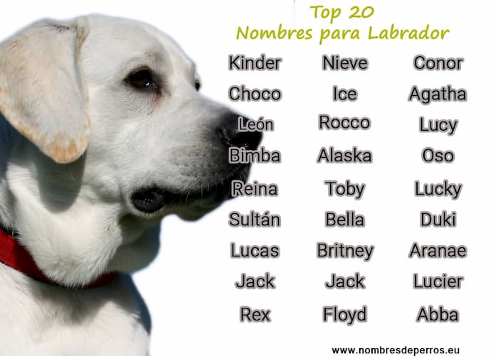 best names for labrador retriever