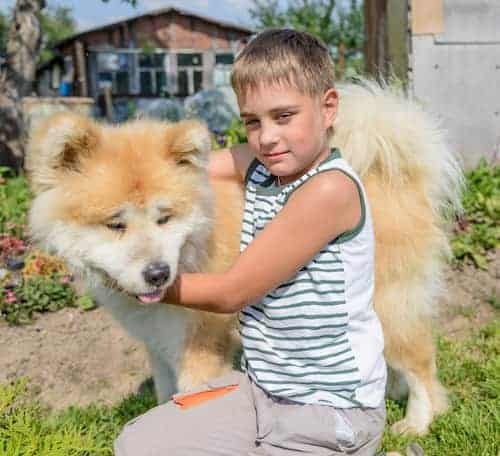akita from japan with a boy