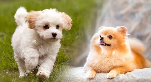 names-for-small-female-dogs